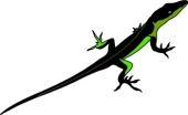 Anole clipart #13, Download drawings