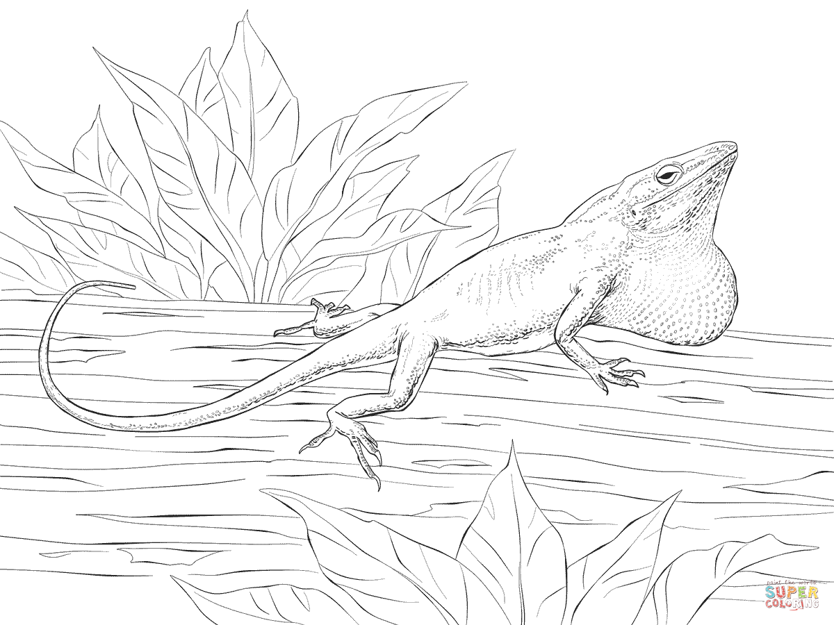 Green Anole coloring #13, Download drawings