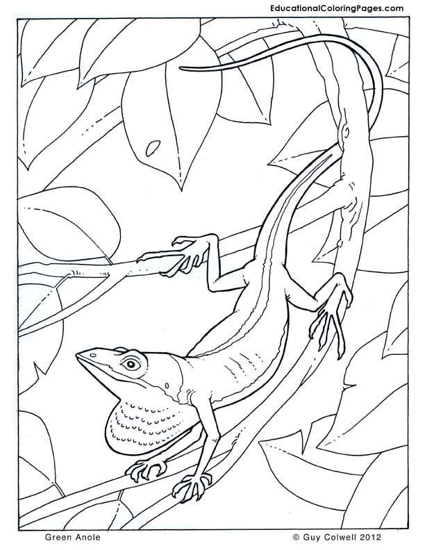 Green Anole coloring #19, Download drawings