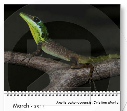 Anole svg #1, Download drawings