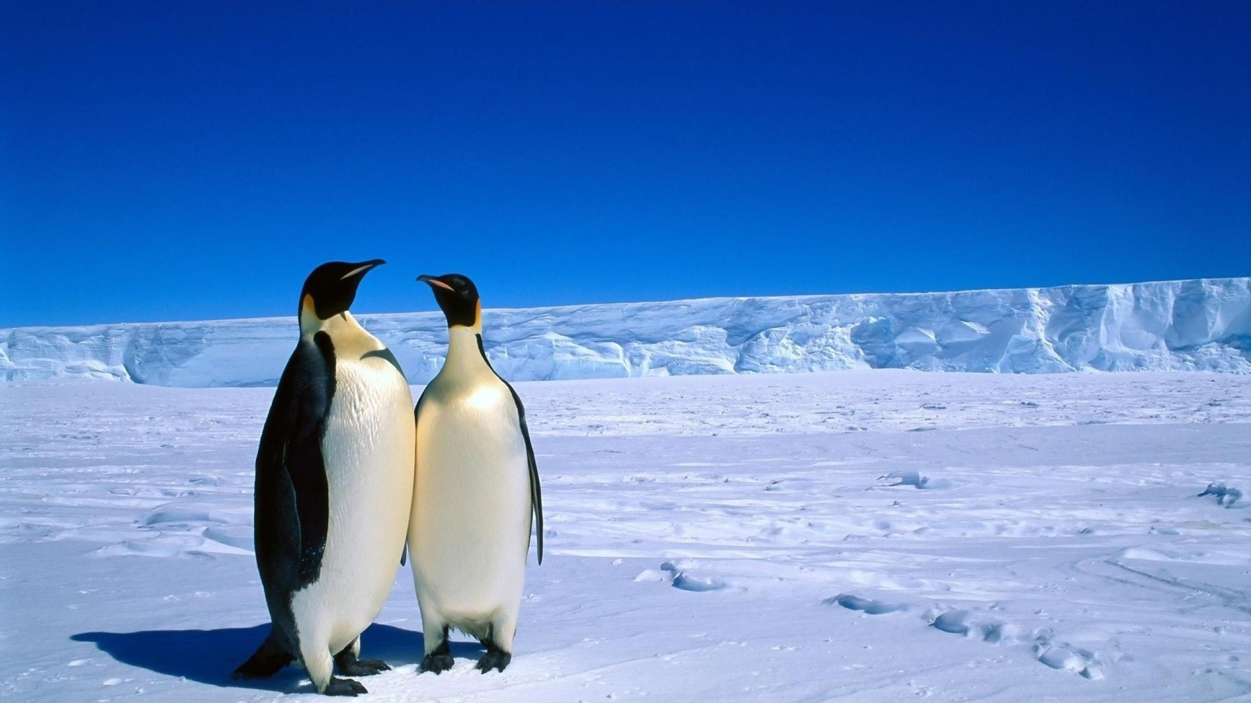 Antarctica clipart #10, Download drawings