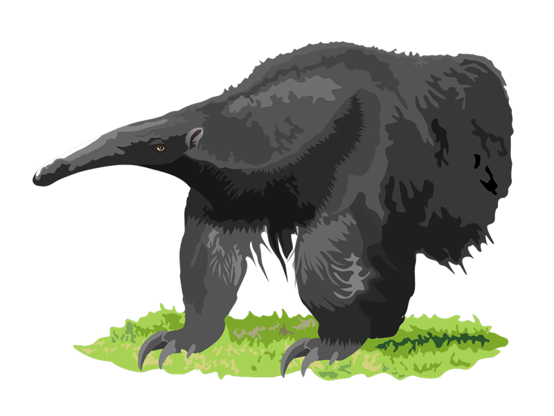 Anteater clipart #15, Download drawings