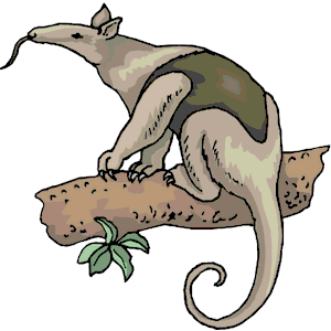 Anteater clipart #17, Download drawings