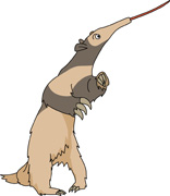Anteater clipart #6, Download drawings