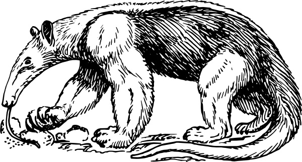 Anteater clipart #2, Download drawings