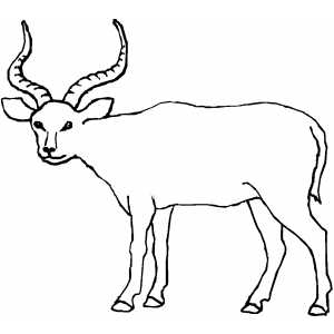 Antelope coloring Download Antelope