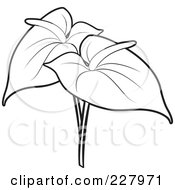 Anthurium clipart #1, Download drawings