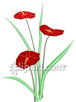 Anthurium clipart #13, Download drawings