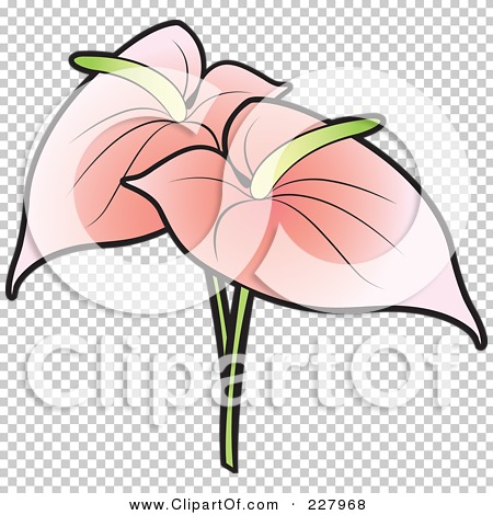 Anthurium clipart #10, Download drawings