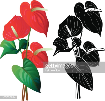 Anthurium clipart #11, Download drawings
