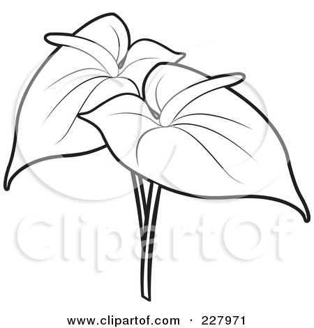 Anthurium clipart #18, Download drawings