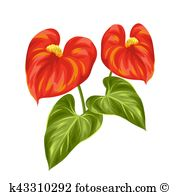 Anthurium clipart #19, Download drawings