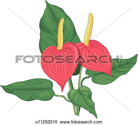 Anthurium clipart #17, Download drawings