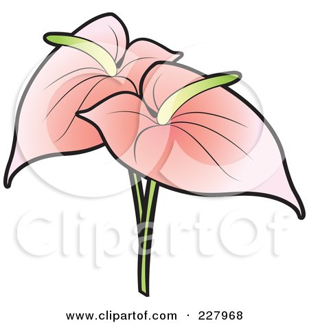 Anthurium clipart #16, Download drawings