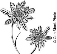 Aonium clipart #15, Download drawings