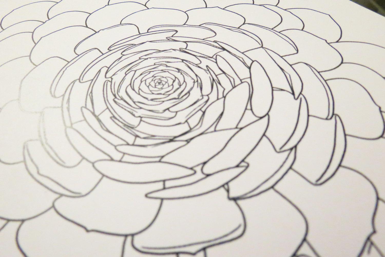 Aonium coloring #7, Download drawings