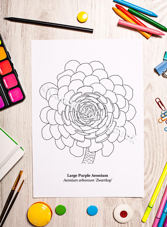 Aonium coloring #14, Download drawings