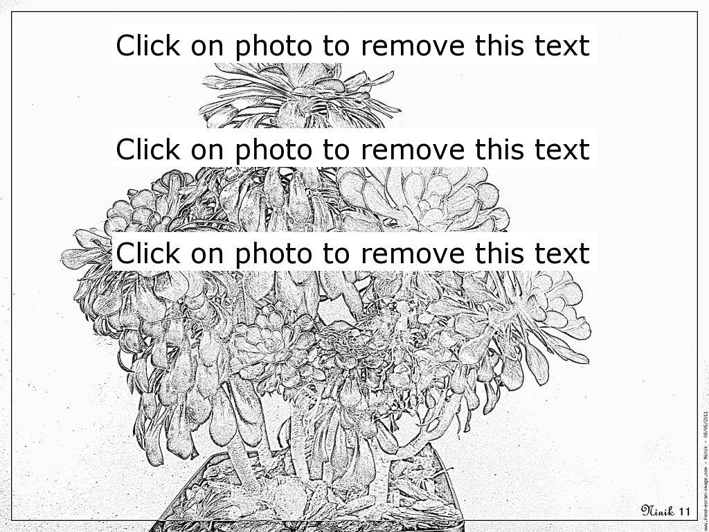 Aonium coloring #1, Download drawings