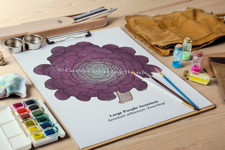 Aonium coloring #12, Download drawings