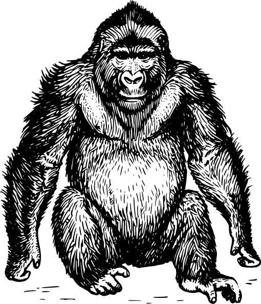 Ape clipart #13, Download drawings