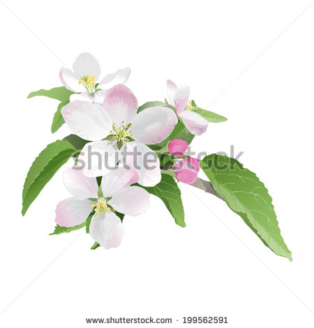 Apple Blossom clipart #1, Download drawings