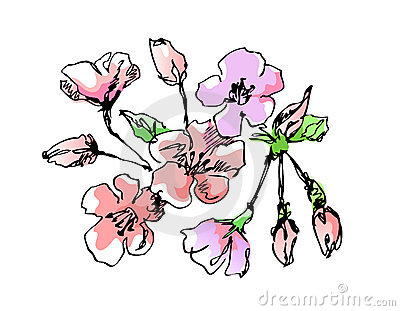Apple Blossom clipart #11, Download drawings