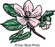 Apple Blossom clipart #20, Download drawings