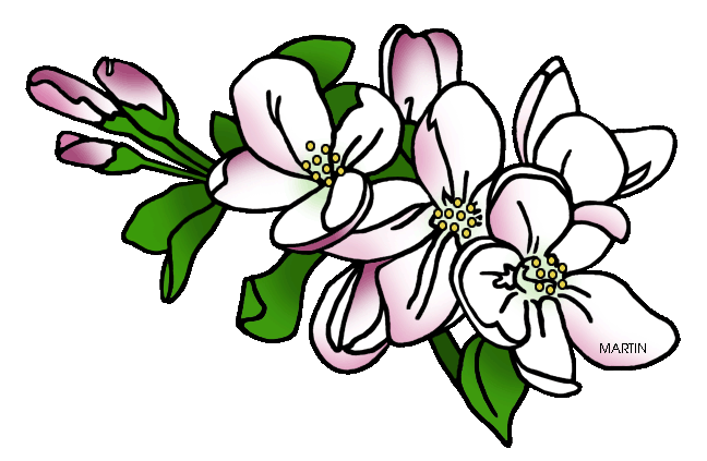 Apple Blossom clipart #13, Download drawings