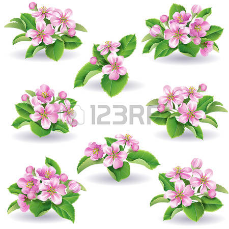 Apple Blossom clipart #17, Download drawings