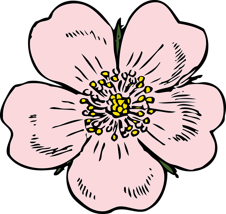 Apple Blossom svg #7, Download drawings