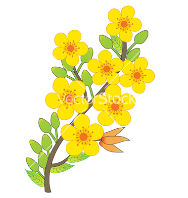 Apricot Blossom clipart #20, Download drawings