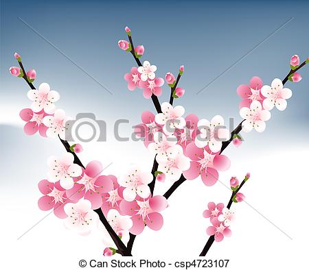 Apricot Blossom clipart #16, Download drawings