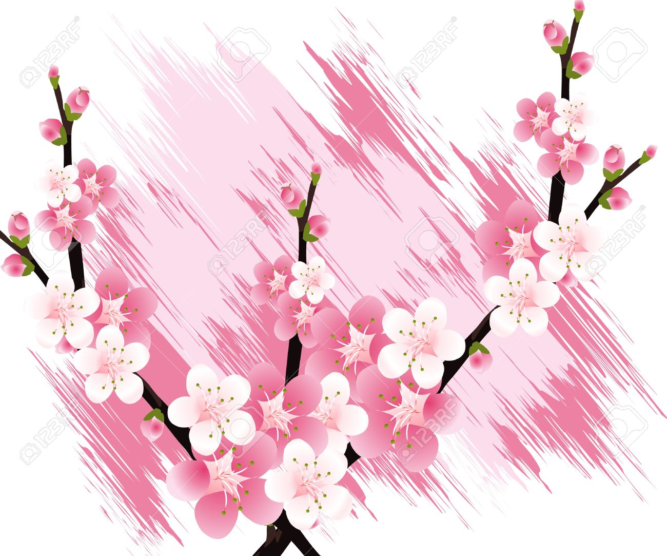 Apricot Blossom clipart #14, Download drawings