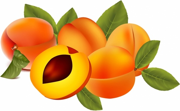 Apricot svg #17, Download drawings