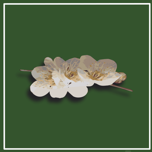 Apricot Blossom svg #11, Download drawings