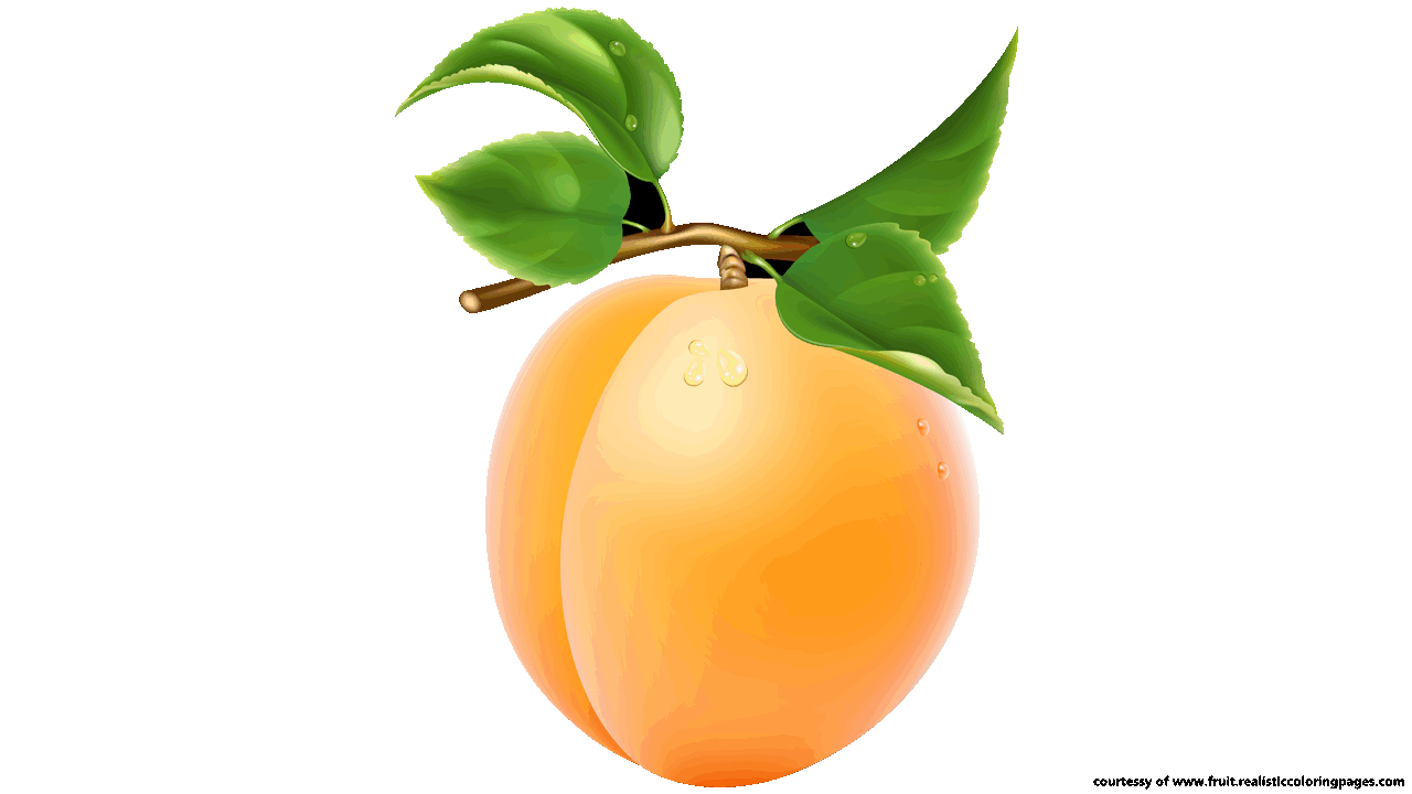 Apricot clipart #10, Download drawings