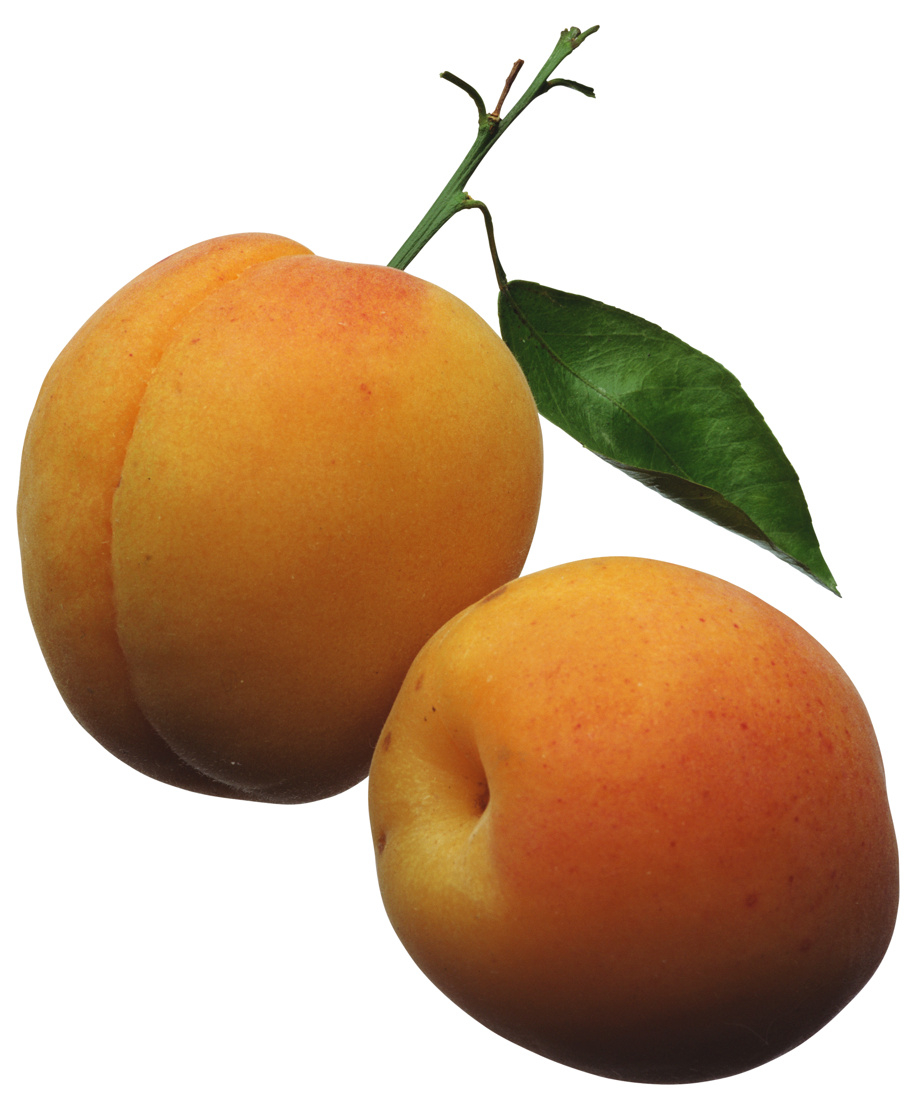 Apricot clipart #2, Download drawings