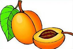 Apricot clipart #18, Download drawings