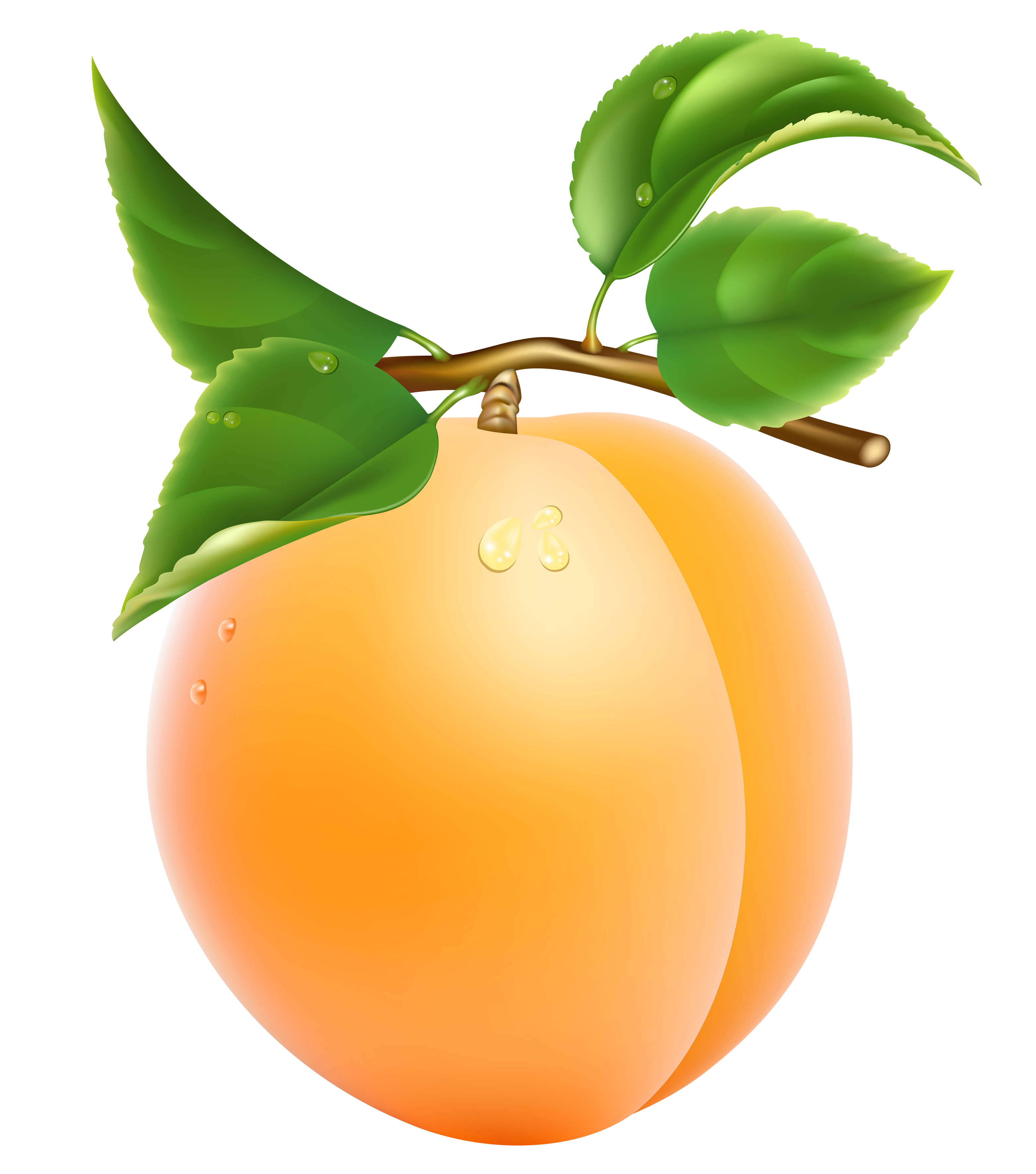 Apricot clipart #1, Download drawings