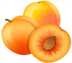 Apricot clipart #17, Download drawings