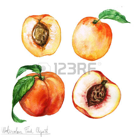 Apricot Tree clipart #3, Download drawings