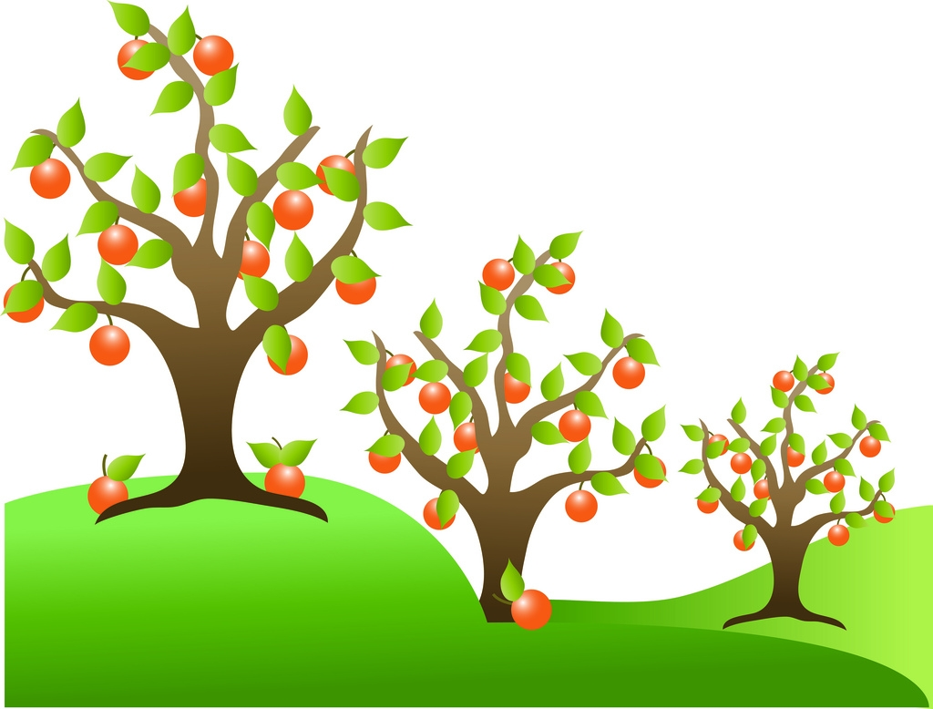 Apricot Tree clipart #6, Download drawings