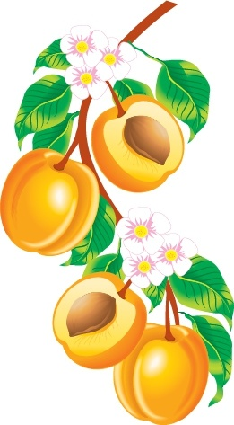 Apricot Tree clipart #12, Download drawings