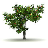 Apricot Tree clipart #5, Download drawings