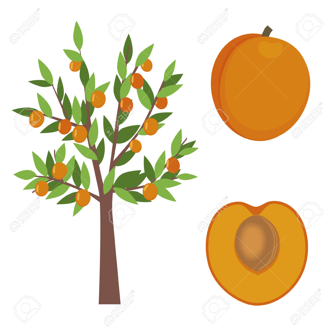 Apricot Tree clipart #16, Download drawings