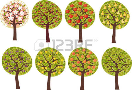 Apricot Tree clipart #2, Download drawings