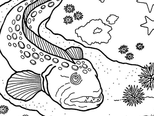 Aquarium coloring #7, Download drawings