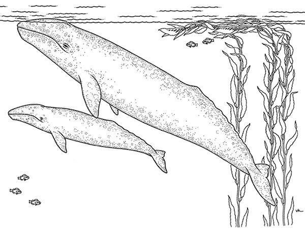 Aquarium coloring #4, Download drawings