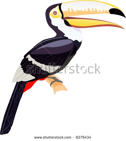 Aracari clipart #9, Download drawings