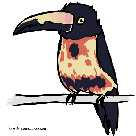 Aracari clipart #2, Download drawings